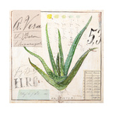Aloe Vera…Sketchbook Posters by Angela Staehling