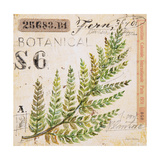 Fern Leaf…Sketchbook Prints by Angela Staehling