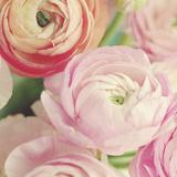 Blushing Blossoms Square II Plakater af Sarah Gardner
