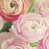 Blushing Blossoms Square II Prints by Sarah Gardner