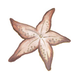 Coastal Icon Coral VII Art by Elizabeth Medley