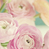 Blushing Blossoms Square I Posters af Sarah Gardner