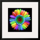 Rainbow Flower Framed Photographic Print by Magda Indigo