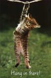 Kitten - Hang In There - Posterler