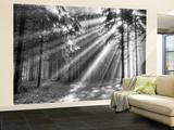 Wood Glade - Duvar Resmi