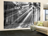 Wood Glade Wallpaper Mural