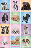 Puppies - Cuties Prints