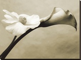 Calla/Anemone Stretched Canvas Print by Steven N. Meyers