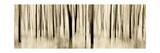 Mystic Forest 1252 Panoramic Fotodruck von Rica Belna