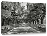 Live Oak Avenue Ii, Gallery-Wrapped Canvas Gallery Wrapped Canvas by Steve Ainsworth