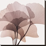 Gingko Leaves II Stretched Canvas Print by Steven N. Meyers