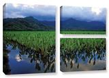 Kauai Taro Field, 3 Piece Gallery-Wrapped Canvas Flag Set Gallery Wrapped Canvas Set by Kathy Yates