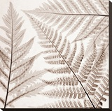 Ferns III Stretched Canvas Print by Steven N. Meyers