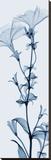 Tall Petunia Bedruckte aufgespannte Leinwand von Steven N. Meyers