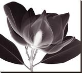 Magnolie Lærredstryk på blindramme af Steven N. Meyers