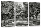 Live Oak Avenue Ii, 3 Piece Gallery-Wrapped Canvas Set Print by Steve Ainsworth