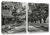 Live Oak Avenue Ii, 2 Piece Gallery-Wrapped Canvas Set Print by Steve Ainsworth