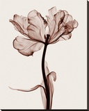 Parrot Tulip I Stretched Canvas Print by Steven N. Meyers