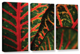 Croton Abstract, 3 Piece Gallery-Wrapped Canvas Set Prints by Kathy Yates
