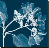 Hydrangeas A (Negative) Stretched Canvas Print by Steven N. Meyers