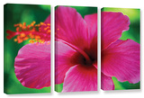 Maui Pink Hibiscus, 3 Piece Gallery-Wrapped Canvas Set Poster by Kathy Yates