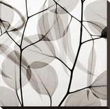 Eucalytus Leaves [Positive] Lærredstryk på blindramme af Steven N. Meyers
