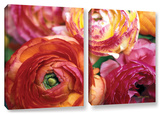 Ranunculus Close Up, 2 Piece Gallery-Wrapped Canvas Set Posters by Kathy Yates