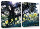Daffodils And The Oak, 2 Piece Gallery-Wrapped Canvas Set Gallery Wrapped Canvas Set by Kathy Yates