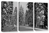 Solitude, 3 Piece Gallery-Wrapped Canvas Set Gallery Wrapped Canvas Set by Kathy Yates