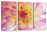 All Dahled Up, 3 Piece Gallery-Wrapped Canvas Set Gallery Wrapped Canvas Set by Kathy Yates
