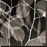 Eucalytus Leaves [Negative] Stretched Canvas Print by Steven N. Meyers