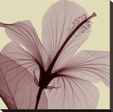 Hibiscus (small) Stretched Canvas Print by Steven N. Meyers