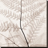 Ferns II Stretched Canvas Print by Steven N. Meyers