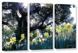 Daffodils And The Oak, 3 Piece Gallery-Wrapped Canvas Set Gallery Wrapped Canvas Set by Kathy Yates