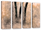 Desert Grasses Ii , 4 Piece Gallery-Wrapped Canvas Set Posters by Linda Parker