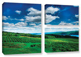 Vineyard And Lake, 3 Piece Gallery-Wrapped Canvas Flag Set Prints by Steve Ainsworth