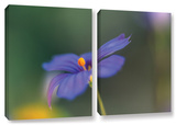 Wildflower Dance, 2 Piece Gallery-Wrapped Canvas Set Posters by Kathy Yates