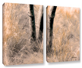 Desert Grasses Ii , 2 Piece Gallery-Wrapped Canvas Set Posters by Linda Parker
