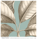 Tropical Varieties I Prints by David Lawrence