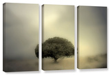 Room To Grow, 3 Piece Gallery-Wrapped Canvas Set Gallery Wrapped Canvas Set by Mark Ross
