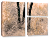 Desert Grasses Ii , 3 Piece Gallery-Wrapped Canvas Flag Set Posters by Linda Parker