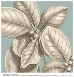 Tropical Varieties II Posters by David Lawrence