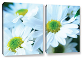 Fresh Daisies, 2 Piece Gallery-Wrapped Canvas Set Prints by Kathy Yates