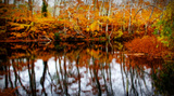 Fall Pond Colors 2 Giclee Print by Jobe Waters