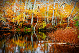 Fall Pond Colors 1 Giclee Print by Jobe Waters