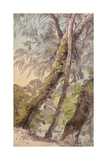 Trees Overhanging Water, 1800 Giclee Print by Francis Towne