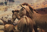 Stuffed Zebra Photographic Print by Kimberley Ross