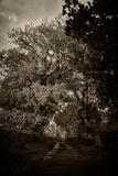 Suffolk Oak Trees Photographic Print by Tim Kahane