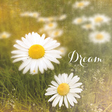 Daisy Dreams Print by Sue Schlabach