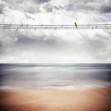 A Yellow Bird Sitting on a Wire Fotografisk tryk af Luis Beltran